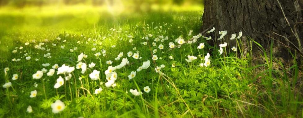 Santé : Les sons de la nature sont-ils bons pour vous ?